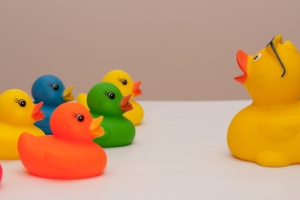 rubber ducks in colors