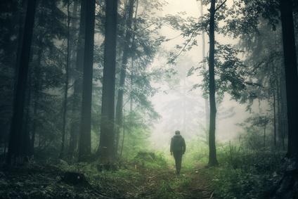 man walking in misty, green forest