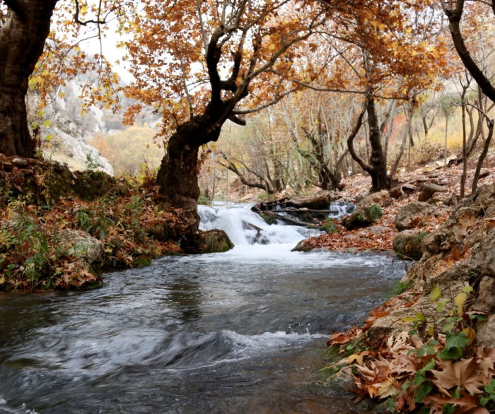 creek in fall