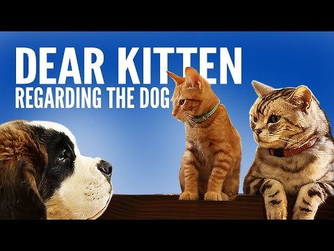 dear kitten regarding dog