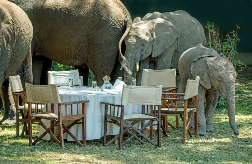 elephants in dining room david-clode-unsplash