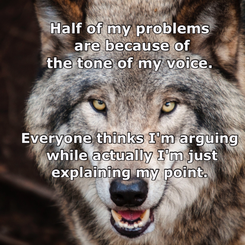 picture of wolf's face, with text superimposed: Half of my problems are because of the tone of my voice. Everyone thinks I'm arguing while actually I'm just explaining my point.
