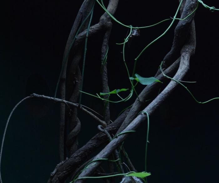vines on dark background