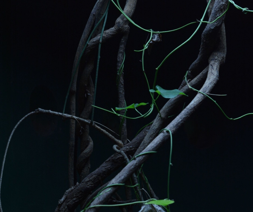vines on dark background