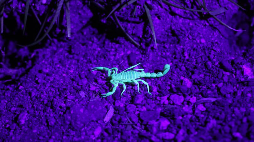 shayna-take scorpion uv unsplash