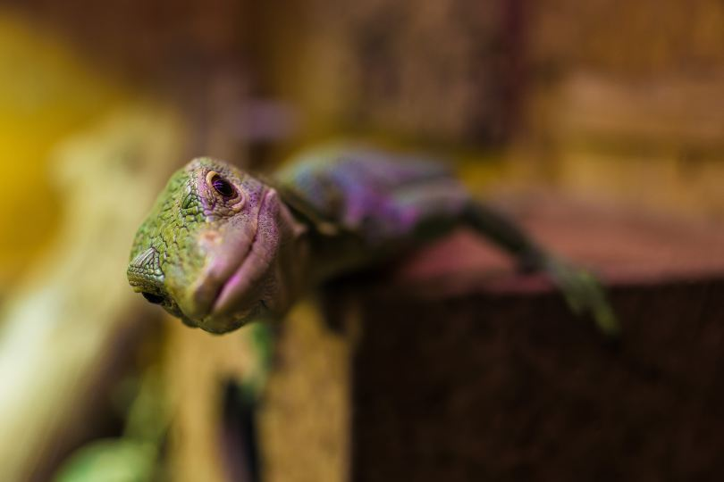 curious gecko philipp-lublasser